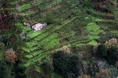 Häuser auf bebauten terassenförmig angelegten Feldern auf dem Hügel auf der Insel von Madeira. Lizenzfreies Stockbild