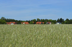 Häuser hinter Getreidefeld lizenzfreie stockfotografie