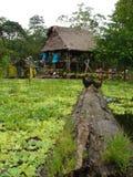 Häuser im Amazonas lizenzfreie stockfotos