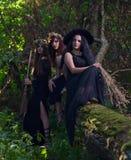 Häxor i mörk skog Arkivbilder