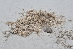 Hål för havskrabba` s på stranden royaltyfri fotografi