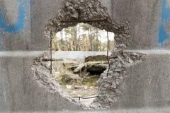 Hål i ett konkret staket som förbiser pinjeskogen Royaltyfria Bilder
