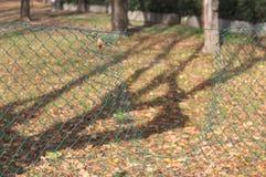 Hålet i det metalliska gröna staketet av parkerar royaltyfri bild
