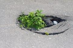 Hålet i trottoaren Royaltyfri Fotografi