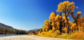 håljackson tree Arkivbild