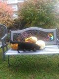 Håll ögonen på den svarta katten för sprickan Fotografering för Bildbyråer