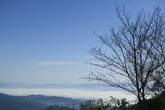 Håll ögonen på morgondimman i dalen av Doi Ang Khang Arkivbilder