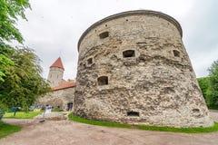 Håll ögonen på tornet feta Margaret i Tallinns gamla stad Maritimt museum arkivfoto
