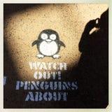 Håll ögonen på ut pingvin omkring Arkivfoto