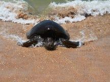 Håll att simma havssköldpaddan royaltyfri bild