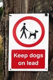 Håll hundar på Leads royaltyfria foton
