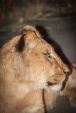Hålla ögonen på över hennes familj Royaltyfria Foton
