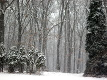 Hålla ögonen på det att snöa Arkivbilder