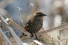 hålla ögonen på för fågel Royaltyfria Bilder