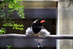 Hålla ögonen på för fågel royaltyfri fotografi
