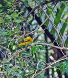 Hålla ögonen på för fågel Arkivfoto