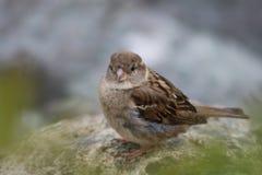 Hålla ögonen på för fågel i Mallaig, Skottland royaltyfri foto