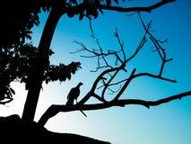 Hålla ögonen på för fågel solnedgången i Caraça Arkivfoton
