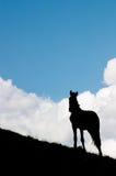 hålla ögonen på för häst Royaltyfria Bilder