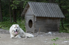hålla ögonen på för hund Royaltyfri Bild