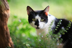 Hålla ögonen på för katt Arkivfoton