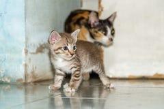 Hålla ögonen på för kattunge Royaltyfri Foto