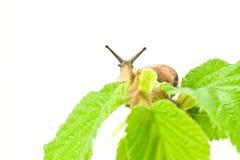 hålla ögonen på för snail Arkivfoton