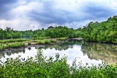 hålla ögonen på för torn för fågelbulohsingapore sungei Royaltyfri Foto