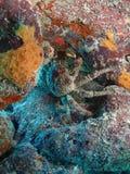 Hålla fast vid krabban Fotografering för Bildbyråer