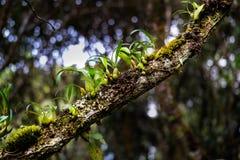Hålla fast vid orkidén Royaltyfri Foto