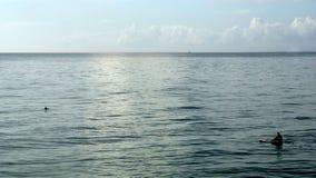 Hållande ögonen på delfin för skovelboarder arkivbild