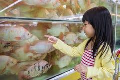 Hållande ögonen på fisk för asiatisk liten kinesisk flicka arkivbilder