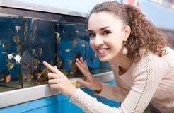 Hållande ögonen på fisk för kvinnlig kund i akvariumbehållare Arkivbild