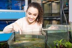 Hållande ögonen på fisk för kvinnlig kund i akvariumbehållare Royaltyfri Foto
