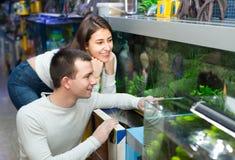 Hållande ögonen på fisk för par i petshop Royaltyfria Bilder