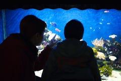 Hållande ögonen på fiskar för barn i akvarium Royaltyfria Bilder