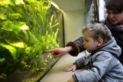 Hållande ögonen på fiskar för familj royaltyfri bild
