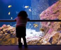 Hållande ögonen på fiskar för liten flicka i ett stort akvarium royaltyfri fotografi