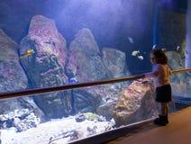 Hållande ögonen på fiskar för liten flicka i ett stort akvarium royaltyfri bild