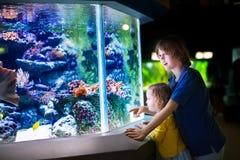 Hållande ögonen på fiskar för syskongrupp i en zoo Arkivfoto