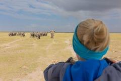 Hållande ögonen på flock för kvinna av elefanter på afrikansk djurlivsafari Amboseli Kenya Arkivbild
