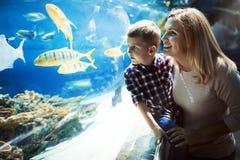 Hållande ögonen på havsliv för moder och för son i oceanarium arkivfoto