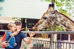 Hållande ögonen på och matande giraff för fader och för son i zoo Lyckliga ungemummel Royaltyfri Bild