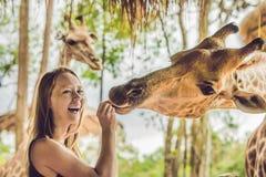 Hållande ögonen på och matande giraff för lycklig ung kvinna i zoo Den lyckliga unga kvinnan som har gyckel med djursafari, parke Arkivbilder