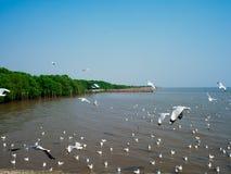 Hållande ögonen på seagulls på Bangpoo, Thailand timmar liggandesäsongvinter Royaltyfri Fotografi