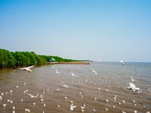 Hållande ögonen på seagulls på Bangpoo, Thailand timmar liggandesäsongvinter Royaltyfri Bild