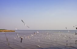 Hållande ögonen på seagulls på Bangpoo, Thailand timmar liggandesäsongvinter Arkivfoto