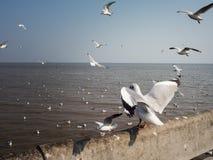 Hållande ögonen på seagulls på Bangpoo, Thailand timmar liggandesäsongvinter Arkivbilder
