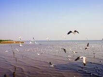 Hållande ögonen på seagulls på Bangpoo, Thailand timmar liggandesäsongvinter Fotografering för Bildbyråer