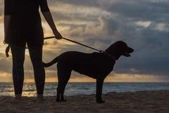 Hållande ögonen på solnedgång för kvinna och för hund Arkivfoto